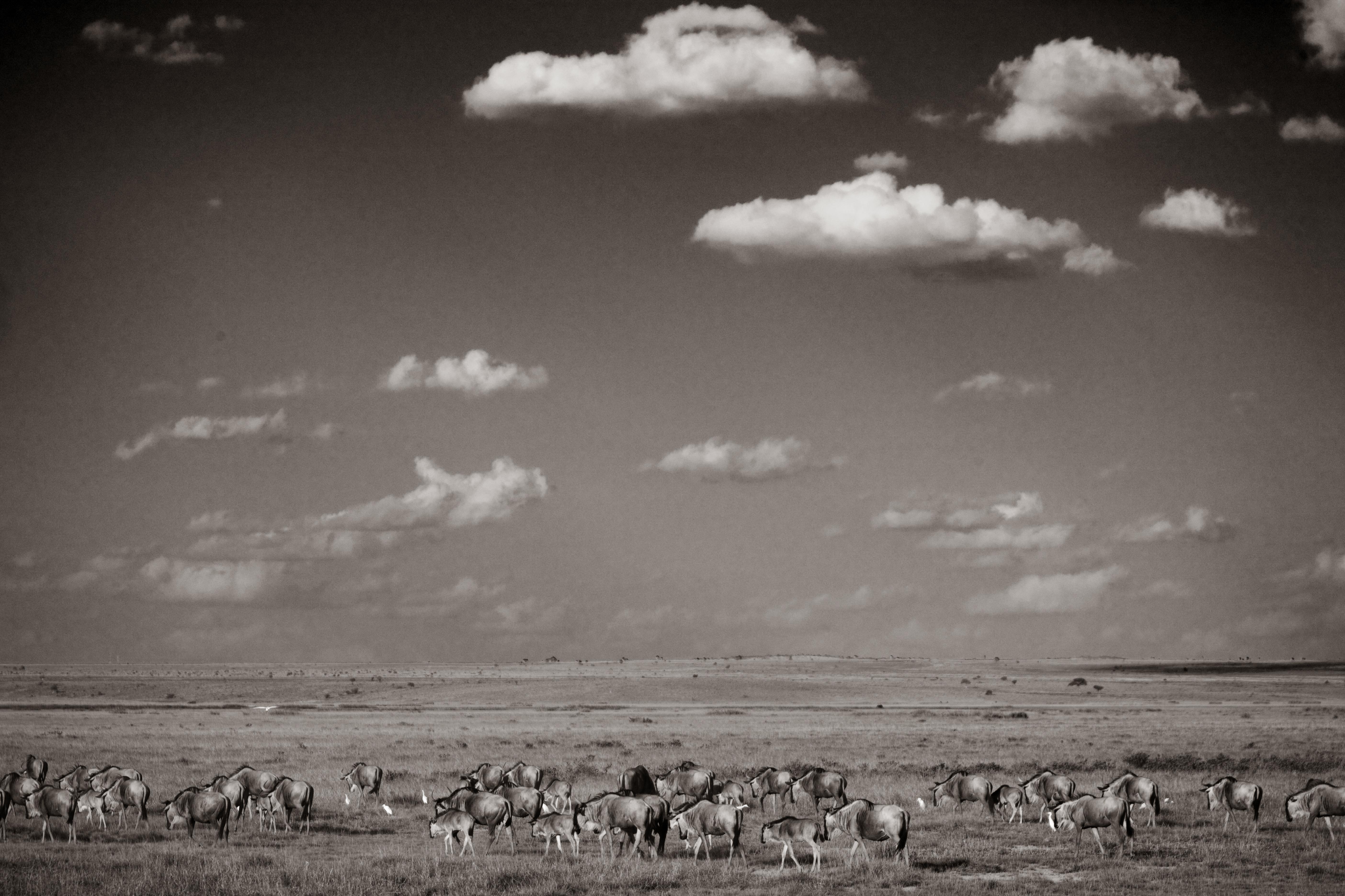 100 Fotos de Los Mejores 10 fotógrafos del mundo